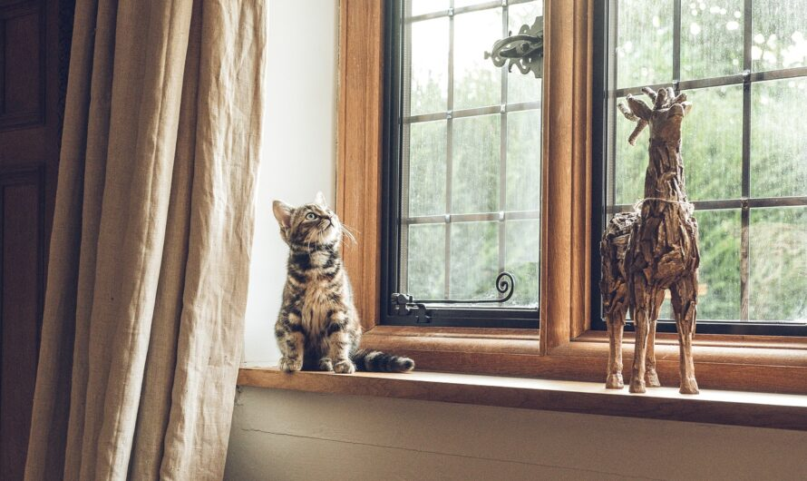 Create a Cat Friendly Apartment and Call It Home!
