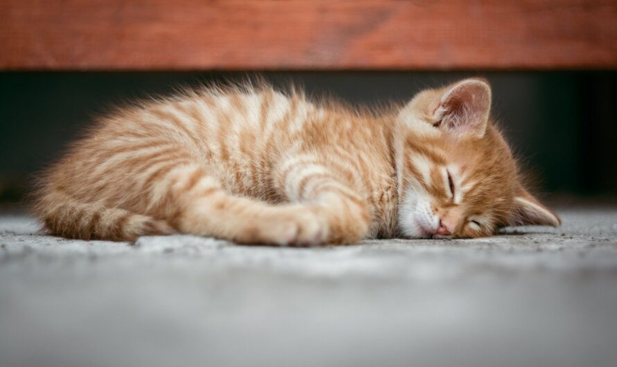 What You Need to Know about Keeping a Kitten in an Apartment