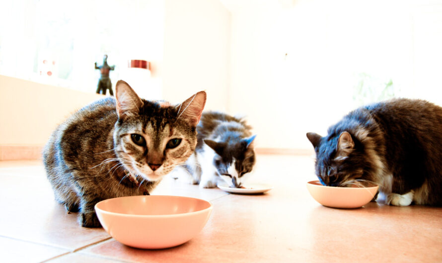 How to Choose the Best Cat Food for Hairballs and Vomiting