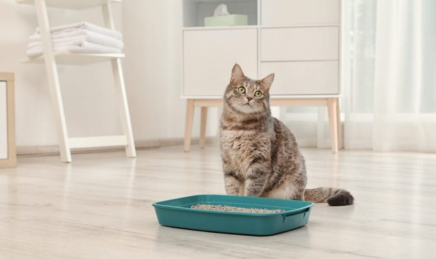Is Your Cat Not Using the Litter Box All of a Sudden?