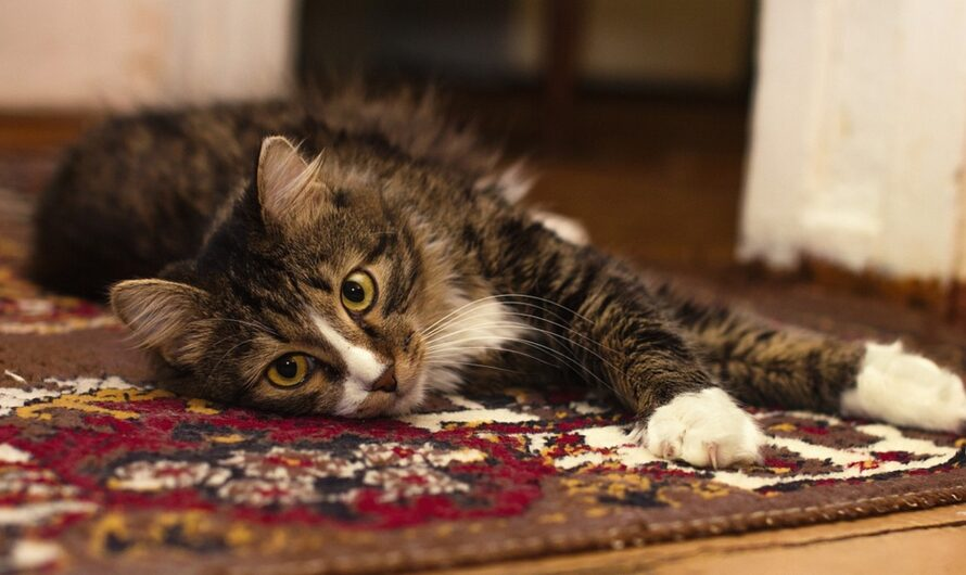 Patience and Love: What to Do If Your Cat Is Peeing on the Rug
