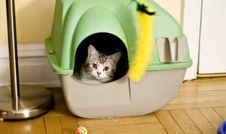 cat playing in the litter box