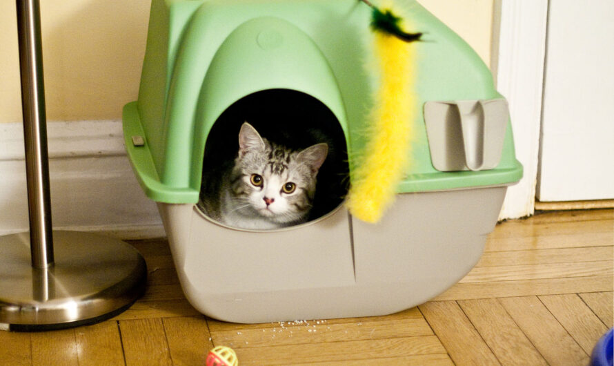 Is Your Cat Playing in the Litter Box? We Have the Explanations!